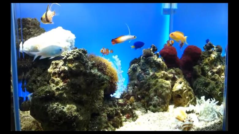 45㎝海水魚水槽動画