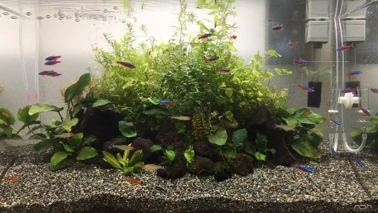 60㎝熱帯魚水槽動画