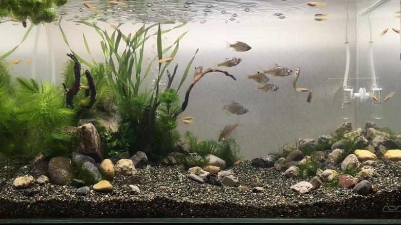 60㎝淡水魚水槽動画