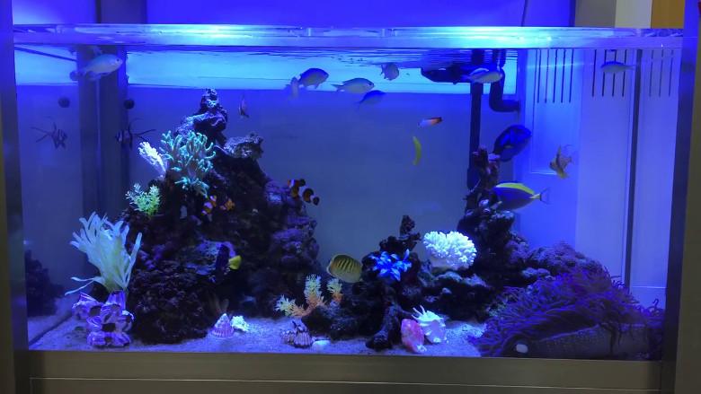 120㎝海水魚水槽動画