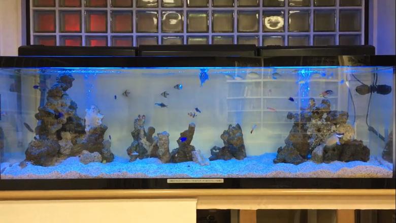 180cm海水魚水槽動画