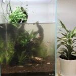 30cm熱帯魚水槽の単発メンテナンスと飼育指導